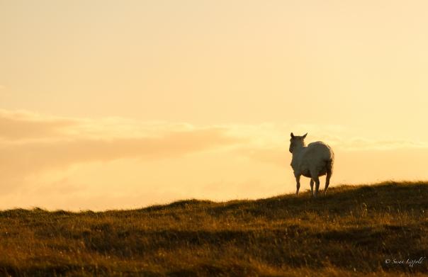 shetlandislands-4