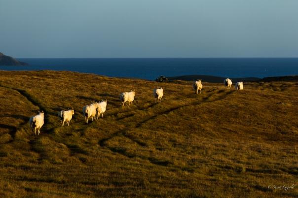 shetlandislands-5