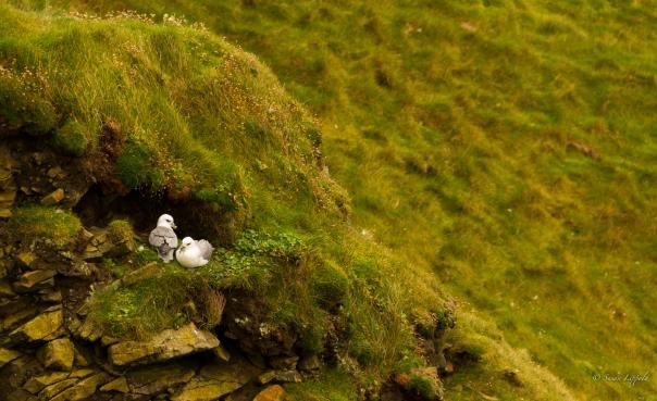 shetlandislands-6